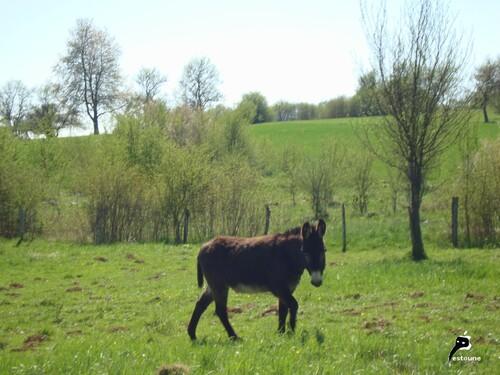 Prière pour aller au paradis avec les ânes de Francis Jammes