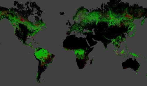 Evolution de la forêt mondiale