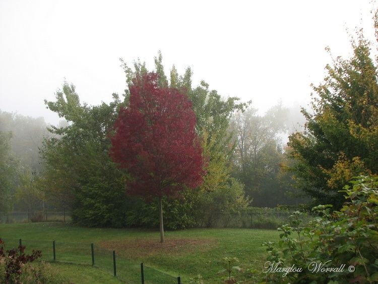 Souffelweyersheim (67): Brouillard