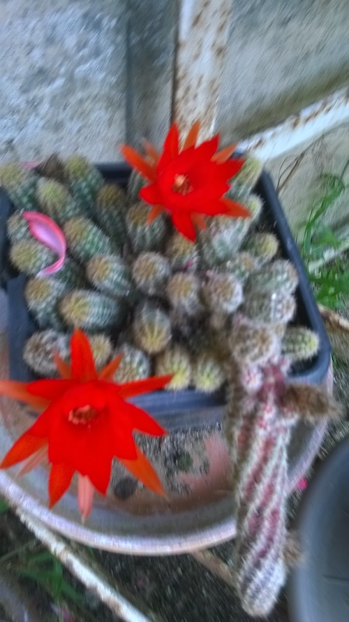 mes fleurs en juillet