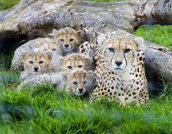 Le top des bébés nés dans des zoo