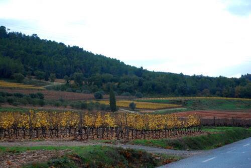 Vignes et pinèdes