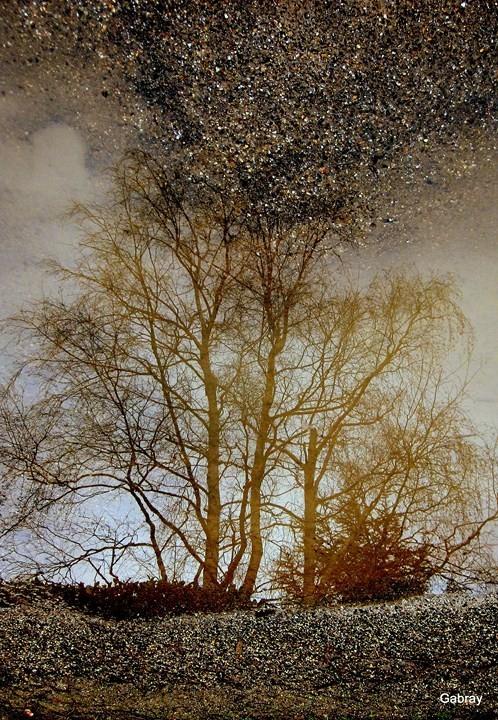 05 - Bouquet d'arbres