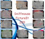 PictureIt 220- Sniffmouse