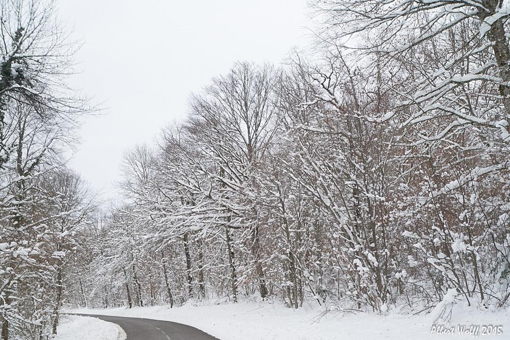 De la neige sur la route et les vignes. 2