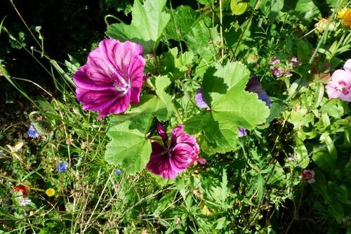 Au jardin et Giordano