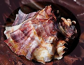 L'huître et la Perle