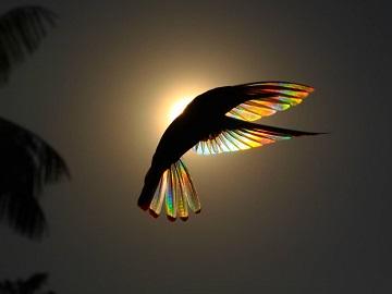 Le p'tit oiseau de toutes les couleurs ...