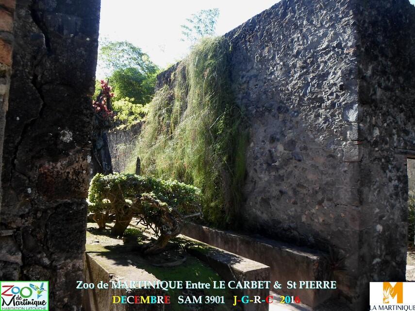 ZOO de MARTINIQUE 3/5 - 13/15  LE CARBET  972      D  18/01/2018