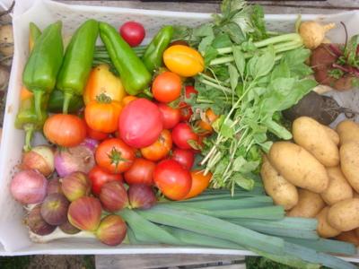 Blog de melimelodesptitsblanpain :Méli Mélo des p'tits Blanpain!, Le 'panier de légumes bio'