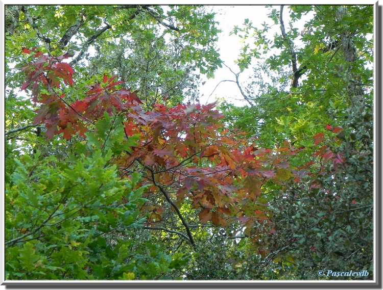branches feuilles rouges