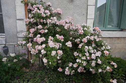 Visite Village Jardin Chedigny : Re festival des roses de chedigny le jardin patou