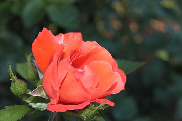 best-off-printemps-3716.JPG