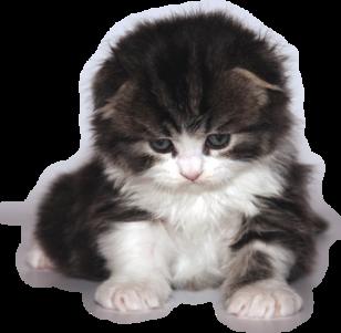 Tubes chats - série 03