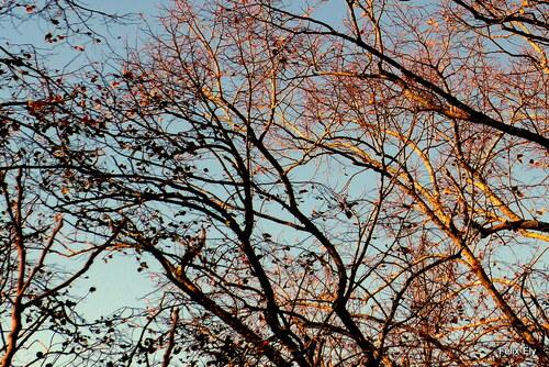 Arbres et branches (1)