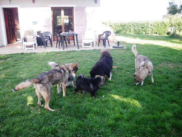 Visites chien