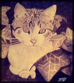 chat au crayon