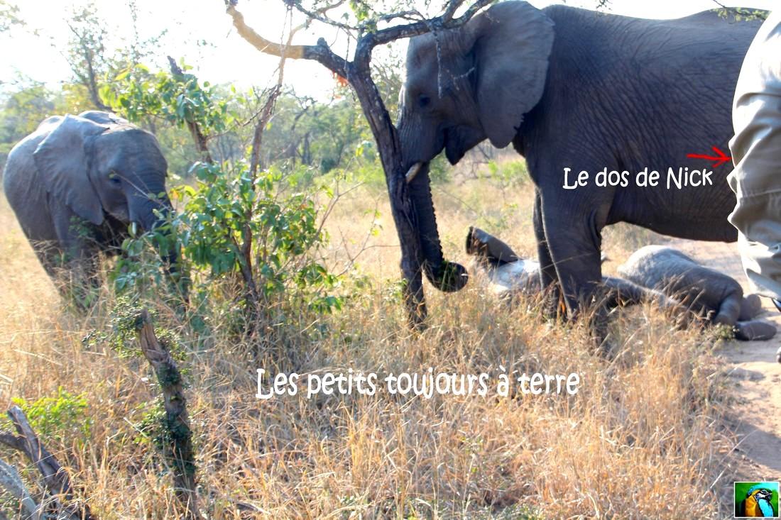Afrique du Sud : juin 2018 safari bébés éléphants 2/4