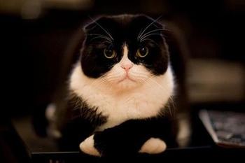 chat déçu