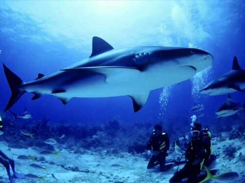 le Jardin de Dakuwaqa - tournage sous-marin de Fiji et Tonga
