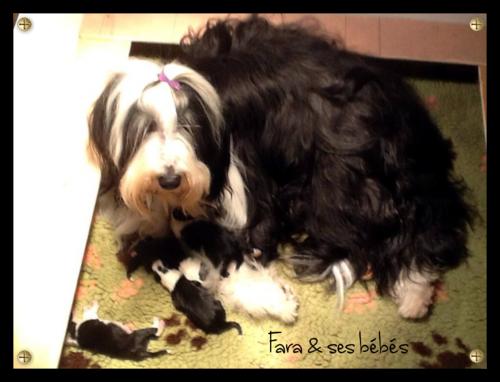 ♥ Fara Fawcet * petite-fille d' Athos* & ses bébés ♥