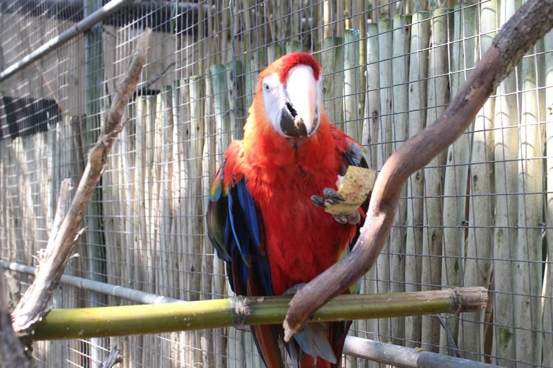 Au zoo d'Asson