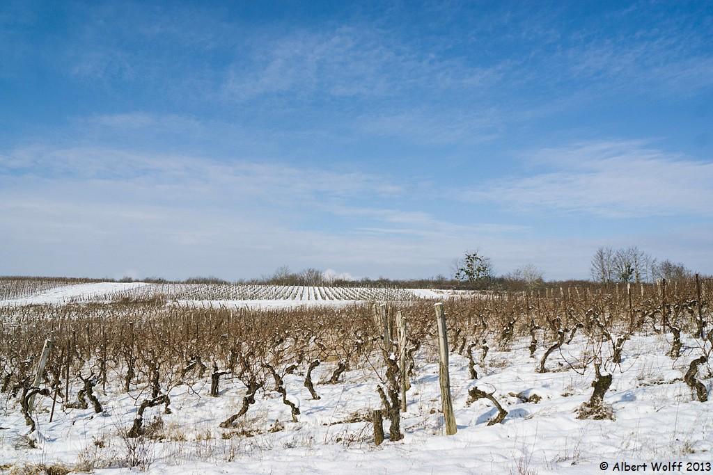 Neige sur la vigne mais au soleil
