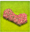 haie ondulatoire fleur-rose