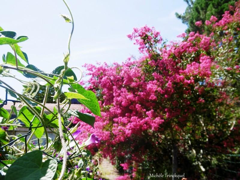Encore des fleurs dans le village le 16 août (suite)...