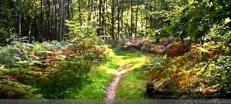 Une promenade dans les bois