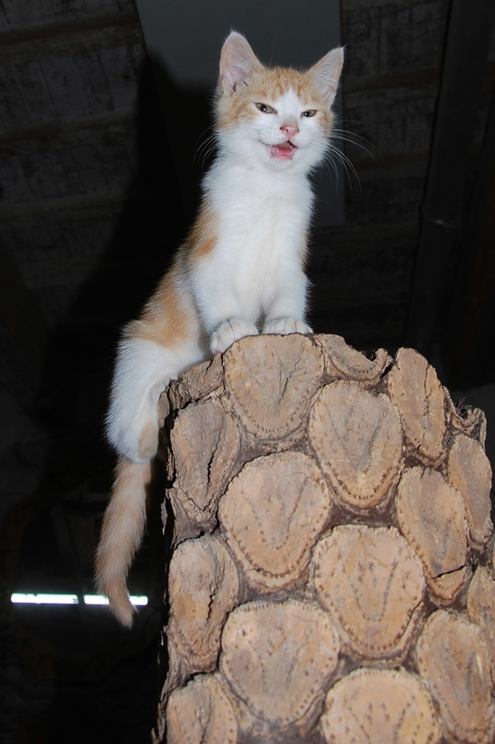 chaton09juilletj