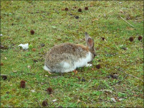 Photo des lapins en liberté du parc Bordelais