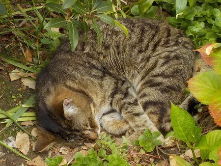 """Echange atc """"chats chez Sandrine : le numéro 5."""