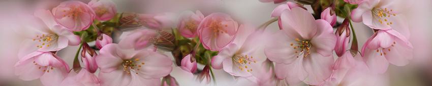 Bannières fleurs 18