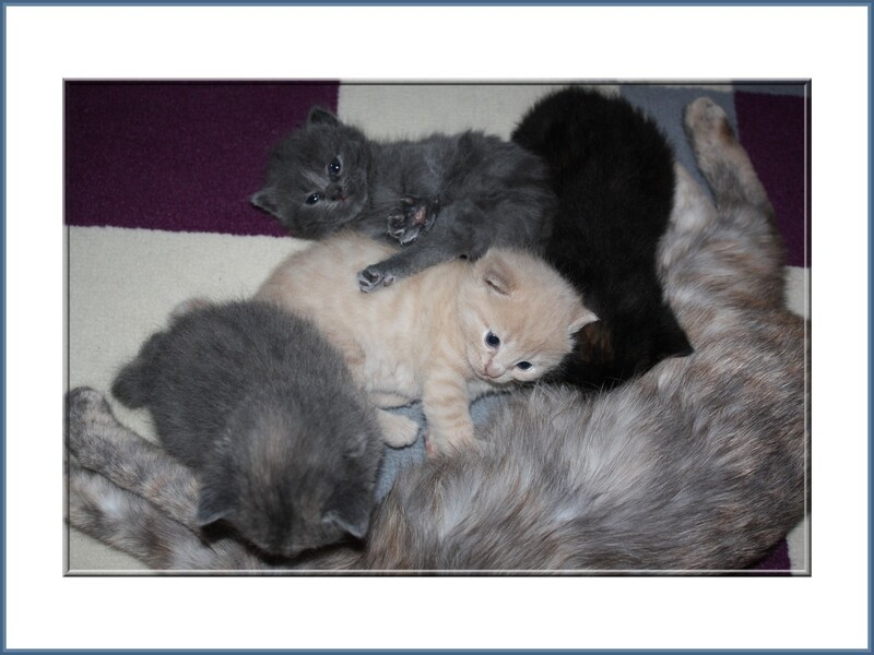 Chatons à 3 semaines