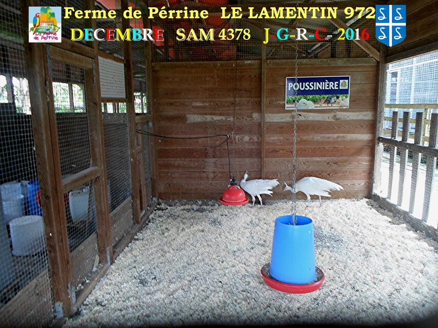 PARC DE MARTINIQUE: la ferme Pérrine  1/4       D    13/08/2017