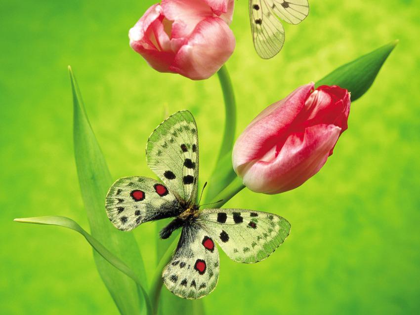 Images de Papillons