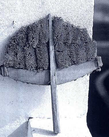 La cardère à lainer