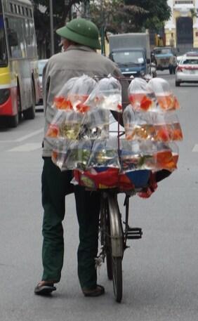 4 au 15 janvier - Vietnam : de Hanoi à Hué