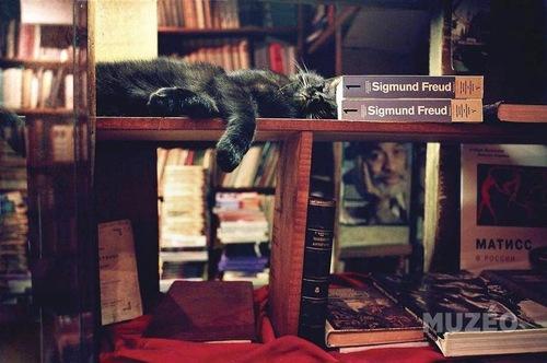 03 - Des chats et des livres encore