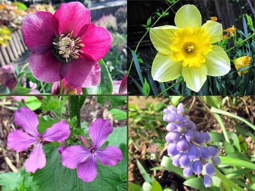 Fleurette de mars,