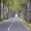 Longue descente ombragée vers Vetheuil