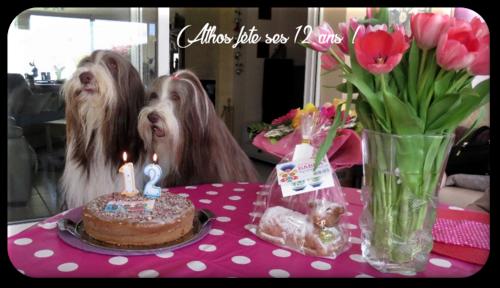 ♥ Athos fête ses 12 ans ♥