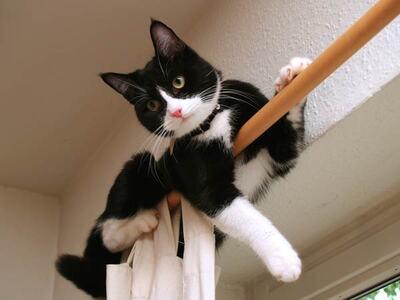 Il grimpe aux rideaux