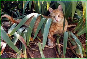 CAT-LOUKOUM-Jardin--Small-.jpg