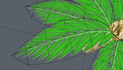 -Le palmier