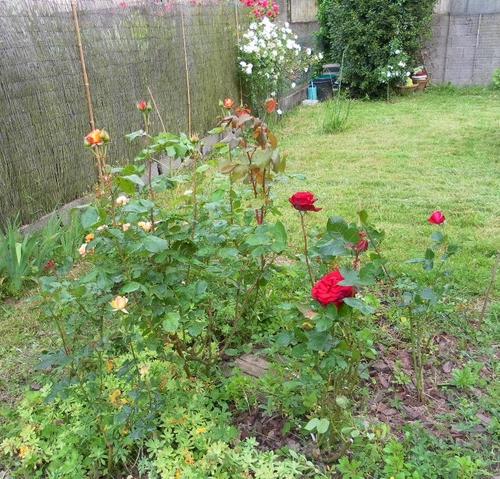 mon jardine en mai