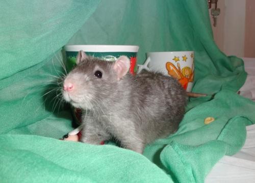 Rat-conte moi 4 loupiots - Page 2 Mod_article62492861_50d23d1ce8e8f