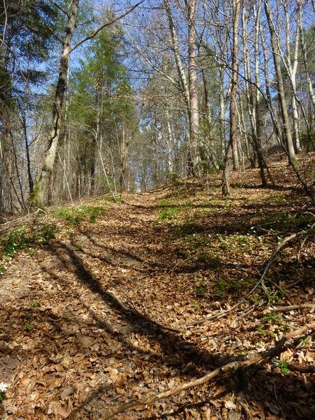 La forêt de Pourcheresse!