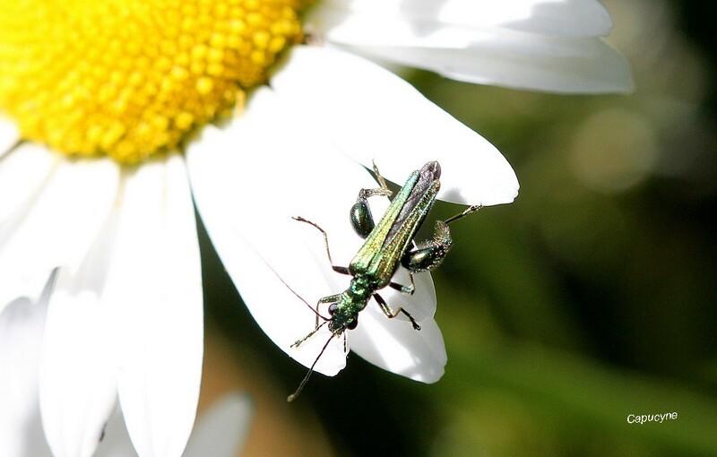 Vers l'étang aux libellules 1